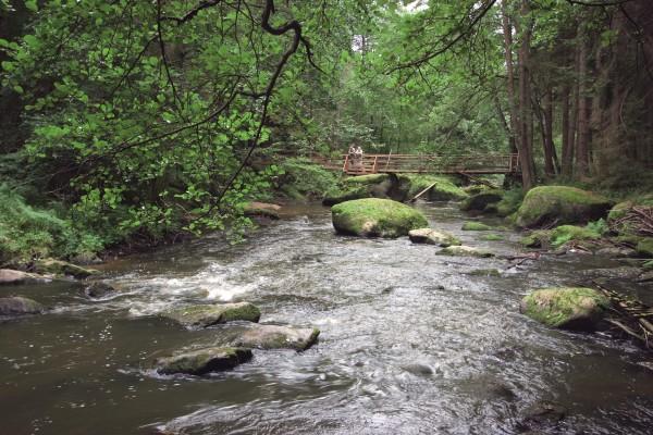 Waldnaab zwischen Falkenberg und Windischeschenbach (Foto: Tourismuszentrum Oberpfälzer Wald - Lkr. TIR)